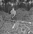 Bosbewerking, arbeiders, boomstammen, gereedschappen, Bestanddeelnr 251-9129.jpg