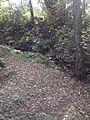 Bosque da UFSC.jpg