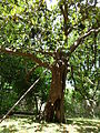 BotanicGardensPisa (51).JPG