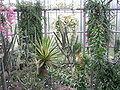 Botanická zahrada Liberec (17) - Kaktusy.jpg