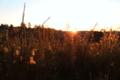 BrachterWald bei Sonnenaufgang05.png