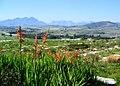 Bracken Nature Reserve Cape Town South Africa.jpg