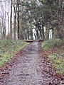 Bridleway from the Old Shaston Drove to Burcombe via the Harewarren - geograph.org.uk - 318338.jpg