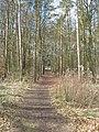 Bridleway through Knowle Wood - geograph.org.uk - 1777901.jpg