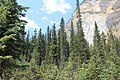 British Columbia - Yoho National Park IMG 4734.JPG