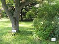 Briukhovychi Arboretum (10).jpg