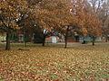 Brown Autumn December 8, 2014.JPG