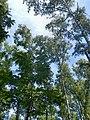 Brzozy - panoramio (1).jpg