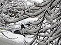 Bucuresti, Romania. Om incercand sa scape din captivitatea zapezii. 6.02.2020.jpg