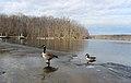 Burke lake park 025.JPG