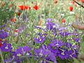 Burnatflowers14.jpg