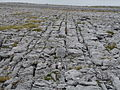Burren Lime 01 (3586476706).jpg