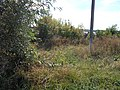 Butivtsi, Poltavs'ka oblast, Ukraine, 37872 - panoramio.jpg