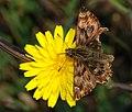 Butterfly October 2007-1.jpg