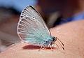Butterfly atop Vesuvius (5948972279).jpg
