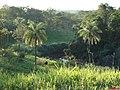 Córrego dos Bagres margeando a Rodovia Cândido Portinari SP-334 no Km-386, sentido Franca-Batatais - panoramio.jpg