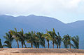 CSIRO ScienceImage 3703 Palms planted along marina entrance at Port Hinchinbrook Resort Cardwell QLD.jpg