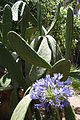Cactus and Flower - Jardin Majorelle - Ville Nouvelle (New City) - Marrakesh - Morocco.jpg