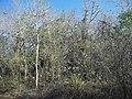 Calotmul (Yaxkukul), Yucatán (02).jpg