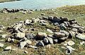 Cambridge Bay Thule Site 1998-06-28.jpg
