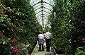 Camellia Walk, Eaton Hall.jpg