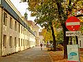 Campus der Universitaet Wien Kastanienbaeume.jpg