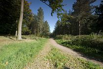 Cannock Chase Path.jpg