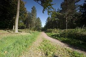 Cannock Chase Path.jpg