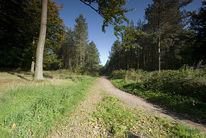 Heart of England Way - Cannock Chase lies on the trail