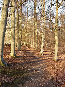 Carpenter's Wood, Chorleywood - geograph.org.uk - 123835