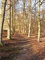 Carpenter's Wood, Chorleywood - geograph.org.uk - 123835.jpg