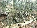 Cascades down the hillside - geograph.org.uk - 2225115.jpg