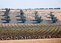 Castilla La Mancha 04 (5558697918).jpg