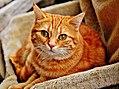 Cat-1046544.jpg