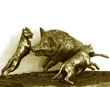 Boar hunting - Wikipedia