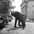 Cegléd 1972, elefánt. - Fortepan 87647.jpg