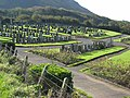 Cemetery south of Girvan - geograph.org.uk - 262894.jpg