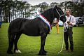 Champion Dales Pony Mare.jpg