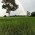 Charoen Suk, Chaloem Phra Kiat District, Buri Ram, Thailand - panoramio.jpg