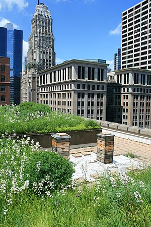Low-impact development (U.S. and Canada) - A green roof installed at Chicago City Hall