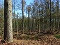 Chisbury Wood - geograph.org.uk - 737999.jpg