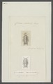 Cilicaea latreillii - - Print - Iconographia Zoologica - Special Collections University of Amsterdam - UBAINV0274 098 10 0008.tif