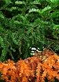 "Cincinnati - Spring Grove Cemetery & Arboretum ""Autumn Encroaching"" (8005313246).jpg"