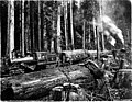 Clear Lake Logging Co railroad leaving landing with load of logs, Washington, 1908 (KINSEY 2837).jpeg