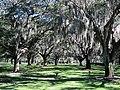 Clearwater,Florida,USA. - panoramio (30).jpg