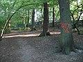Coldfall Wood - geograph.org.uk - 201249.jpg
