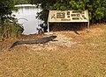Coot Bay Pond^ - panoramio (1).jpg