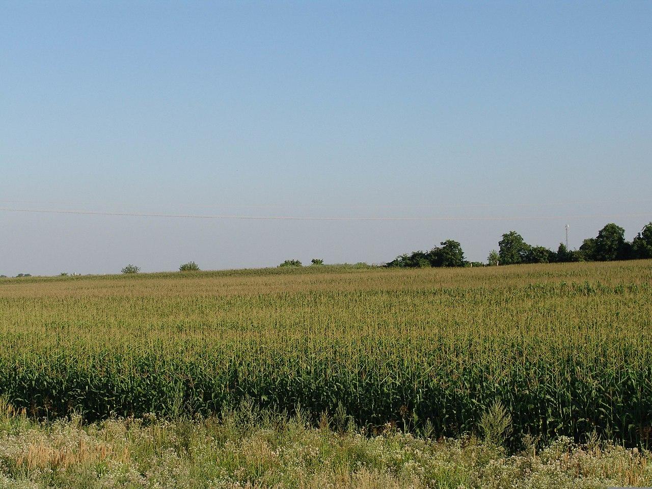 Kukuričné pole