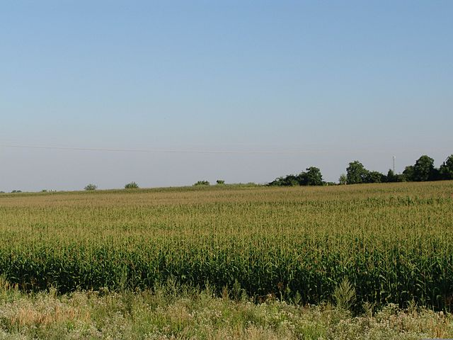 https://upload.wikimedia.org/wikipedia/commons/thumb/2/26/Corn_field.jpg/640px-Corn_field.jpg?uselang=pt-br