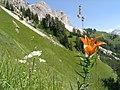Cortina d'Ampezzo - panoramio - Carsten Wiehe.jpg